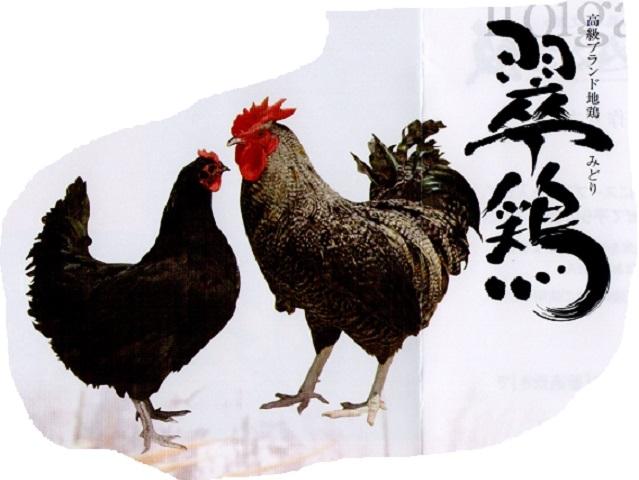 糸魚川にいがた地鶏「翠鶏(みどり)」